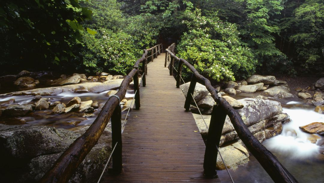 bridge,river,water,rock,tree,forest,river