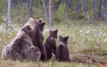 cubs,wild,cute,grass