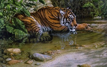 Lee kromschroeder,tiger river,jungle,thirsty,painting,Tiger