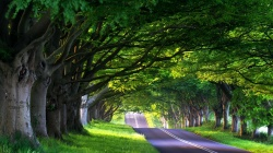 tree,Road,nature,green