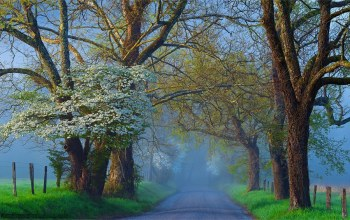 morning,Road,fog,tree
