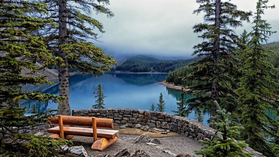 bench,water,tree