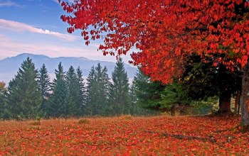 mountain,grass,leaves,colors,autumn,trees