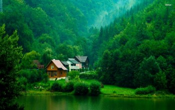 cabin,tree,water,forest,Lakeside