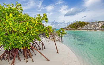 Bahamas,Galloway,beach,mangrove,Long island,мангры
