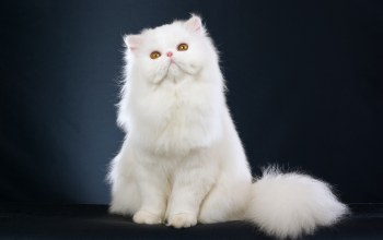 cat,White,Kitty,cute