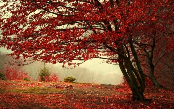 tree,flower,sunlight,leaves,autum