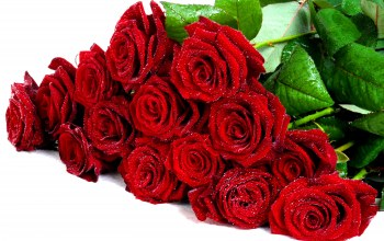 beautiful,roses,flower,rose,drops,Bouquet,red roses,lovely,cool,pretty,nice,wet