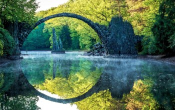 forest,forest,reflextion,tree,bridge