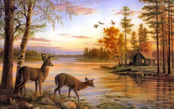 deer,painting,mary pettis,Quiet evening,birch,river