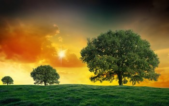 fields,landscapes,tree