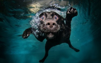 underwater,water,animals,Muzzles,bubbles