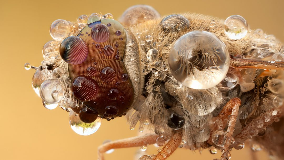 water,insect