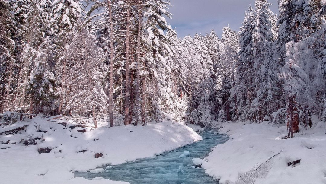 forest,water,snow