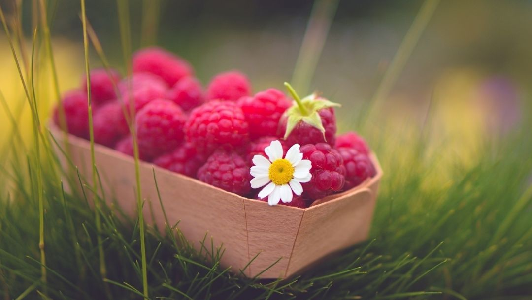 raspberries,Red,fruit,basket