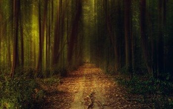 path,darks,solitary,tree,leaves