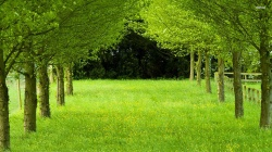 grass,naturals,green,forest,file,tree