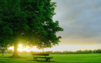 bench,clouds,sky,tree,grass