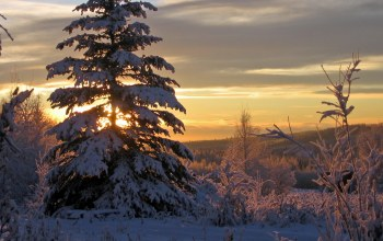 snow,clouds,Sunset,trees