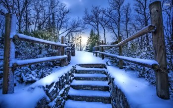 bridge,snow,ice,winter,tree