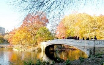 bridge,leaves,autumn,tree,river