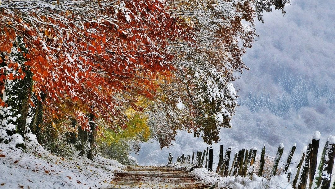 trees,snow,mountain,path,winter