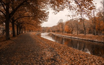 leaves,tree,autumn,river