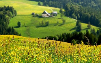 grass,mountain,valley,flower,houses