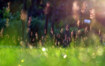 grass,spring,sunshine