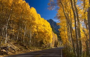 yellow,trees,Road,leaves,mountain