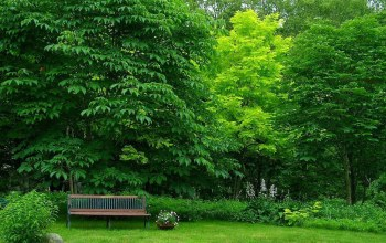 bench,tree,grass,forest