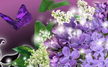 flower,blossoms,Purple,Butterfly