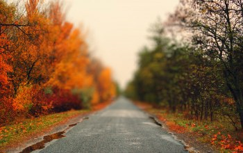 colorfull,heat,Road,tree