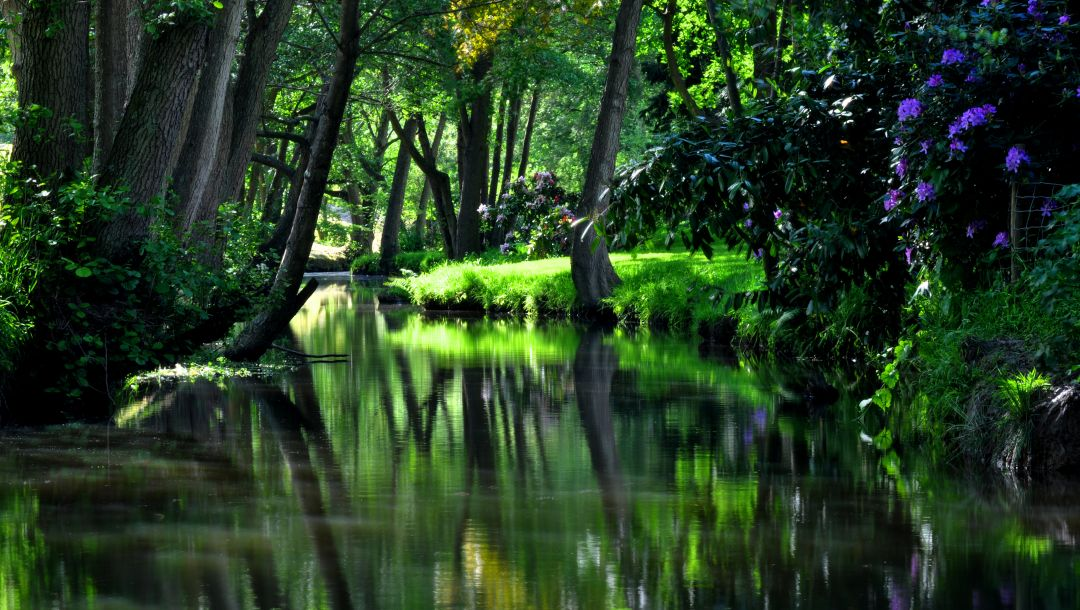 water,park,nice,trees,reflection,beautiful,tree,cool,grass