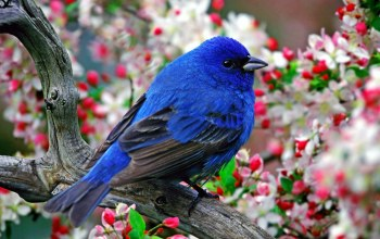fly,bluebird,branch,tree,wild