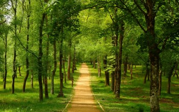 tree,forest,path