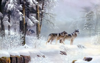 wolves,winter,snow,wild