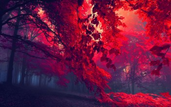sunlights,forest,Red,tree,leaves