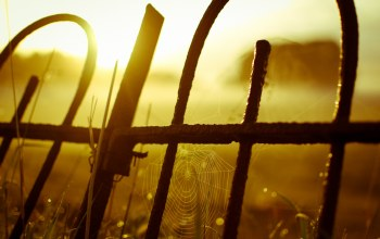 setting,yellow,Sunset,fence