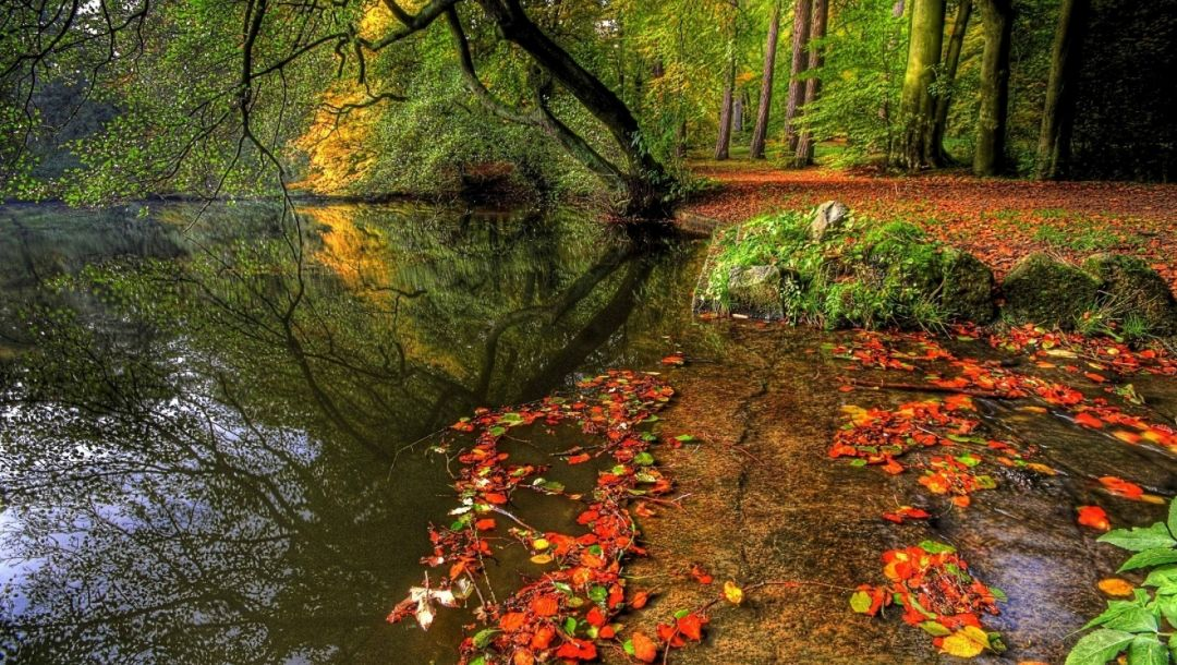 river,autumn,tree,water,forest,leaves,pretty