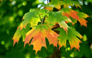 leaves,autumn,gree,branch