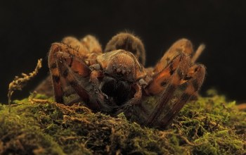 паук,dirty dead dusgusting spider