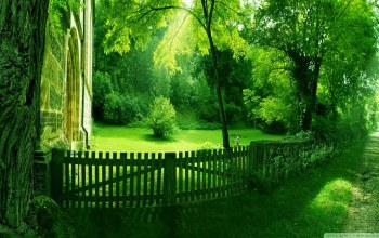 fence,forest,path,tree