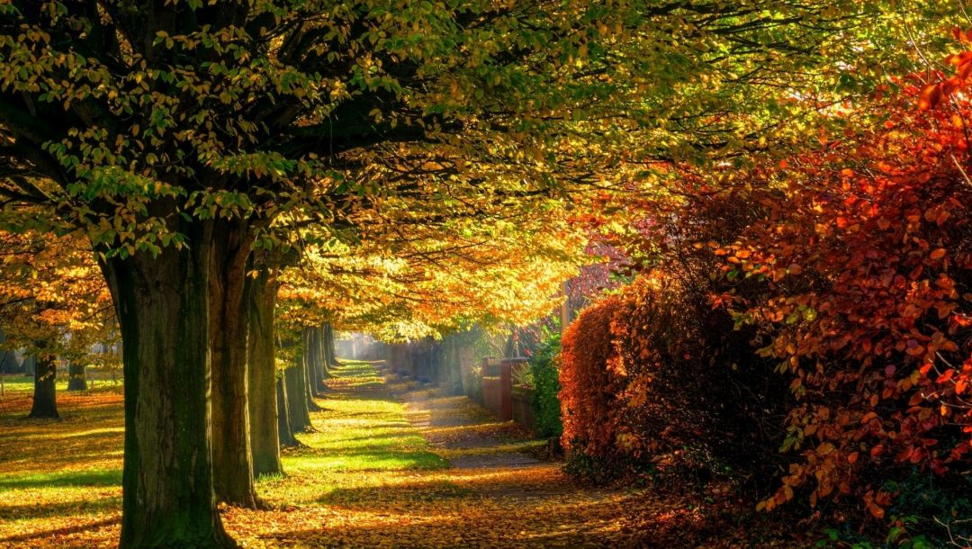autumn,path,leaves,trees,colors