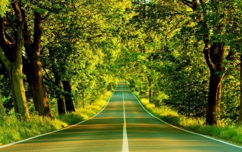 Road,tree,forest