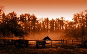 Animal,horse,Пейзаж,landscape,morning,golden,peaceful