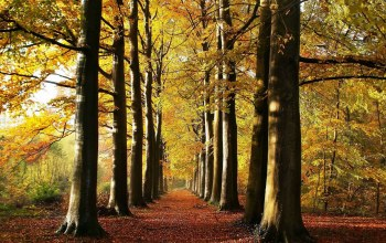 leaves,forest,tree,woods