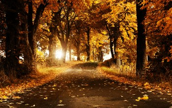 yellow,nice,shine,forest,Sunset,breeze,autumn breeze,view,leaves,cool,trees,jungle,Road,leaf,winter,bright,spring,flower,awesome,summer,sunny,autumn