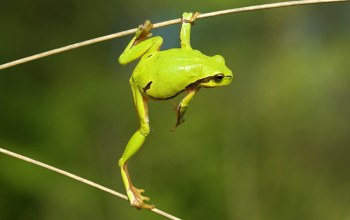 Frog,wild,tree,branch