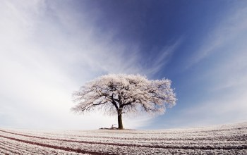 arable,sky,tree,field,snow